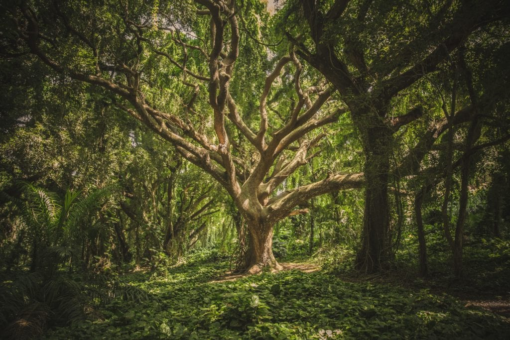 Tree in forest of plants